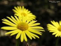 flowersfloristsgifts.com